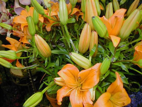 A Garden Grows at Matles Florist! For Valentine's Day, Easter, and Celebrations In Between!