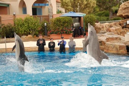 Dolphins en pointe